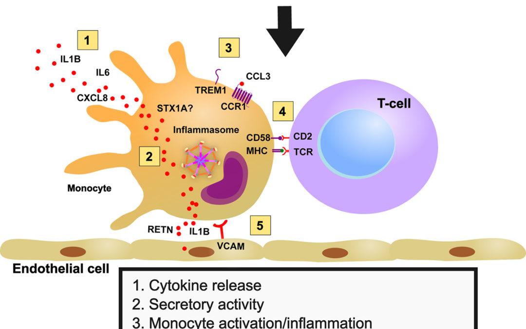 Clonal Hematopoiesis-Driver DNMT3A Mutations Alter Immune Cells in Heart Failure